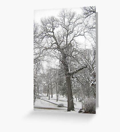 Feb. 19 2012 Snowstorm 29 Greeting Card