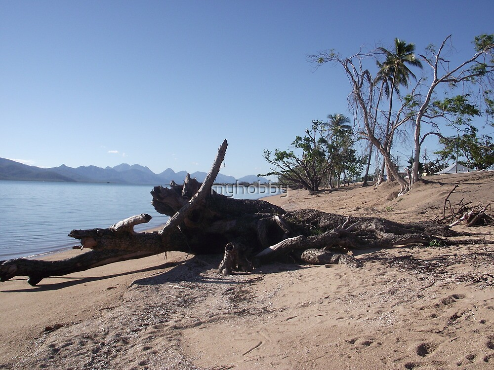 dead tree on beach Cardwell after Cyclone Yasi February 2012 by myhobby