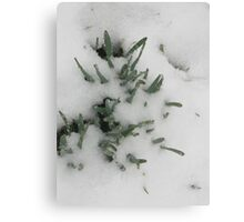 Feb. 19 2012 Snowstorm 31 Canvas Print