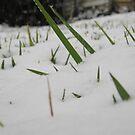 Feb. 19 2012 Snowstorm 32 by dge357