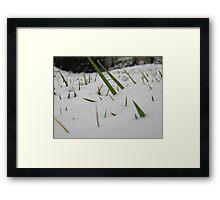 Feb. 19 2012 Snowstorm 32 Framed Print