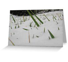 Feb. 19 2012 Snowstorm 32 Greeting Card