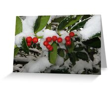 Feb. 19 2012 Snowstorm 33 Greeting Card