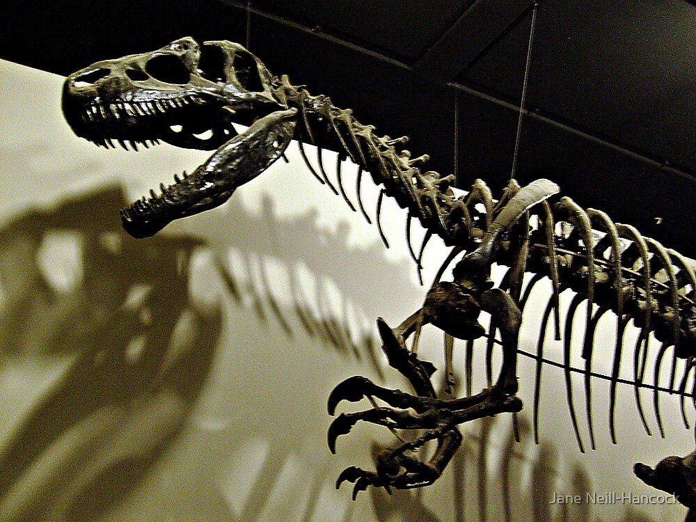 Raptor Skeleton and Scary Shadows by Jane Neill-Hancock