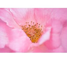 Candy Floss Photographic Print