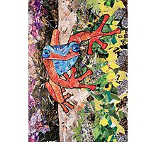 'Red Tree Frog' ~ Recycled Magazine Art  Photographic Print