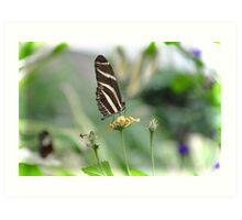 Zebra Longwing - Heliconius Charitonius Art Print