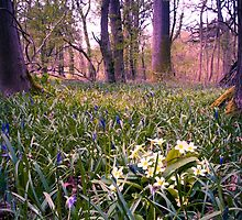 Salcey Forest in Spring by Ralph Goldsmith