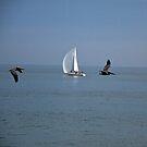 2 Pelicans and a Sailboat by Renee D. Miranda
