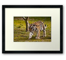 How Much Does My Paw Weigh? Framed Print