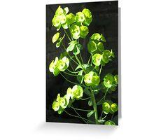Euphorbia II Greeting Card