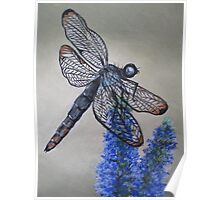 Dainty Dragonfly Poster