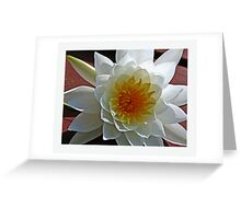 Lily Flower Greeting Card