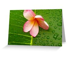 Water on a Flower Greeting Card