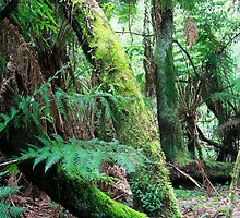Rainforest Dreaming by Bevlea Ross