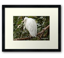 Nature at it's err ungliest Framed Print