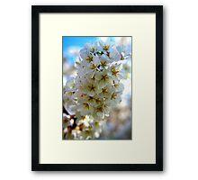 Spring Explosion Framed Print