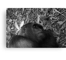 Sleeping gorilla Canvas Print