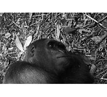 Sleeping gorilla Photographic Print