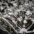 Feb. 19 2012 Snowstorm 34 by dge357