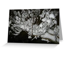 Feb. 19 2012 Snowstorm 35 Greeting Card