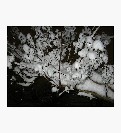Feb. 19 2012 Snowstorm 35 Photographic Print