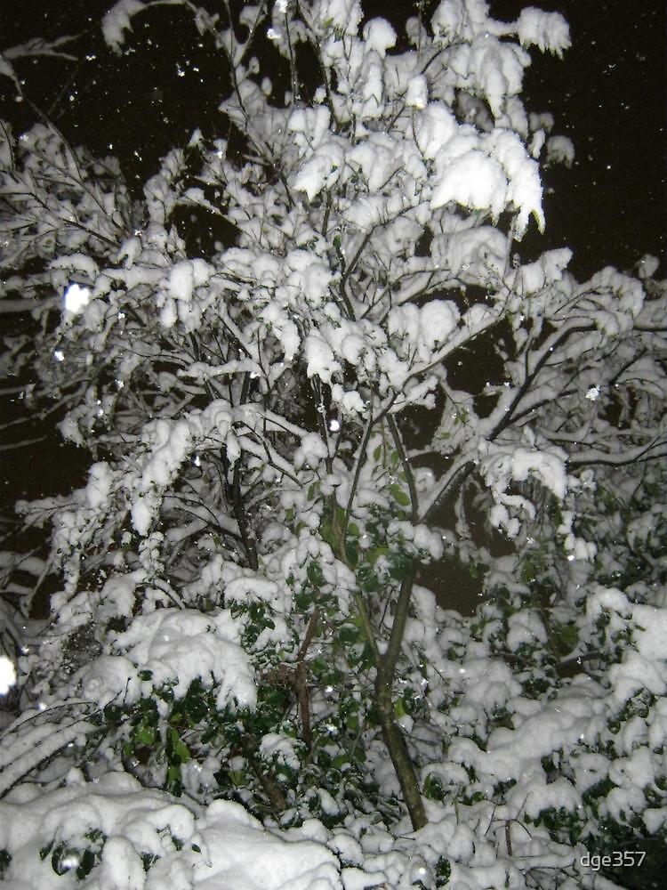 Feb. 19 2012 Snowstorm 36 by dge357