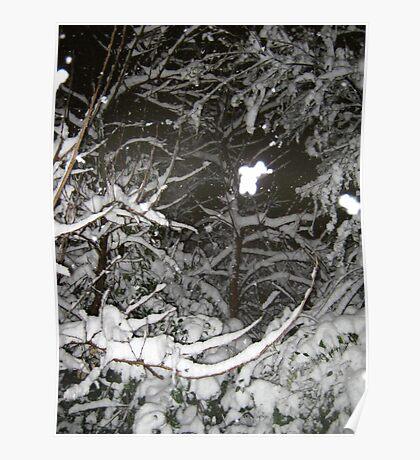 Feb. 19 2012 Snowstorm 37 Poster