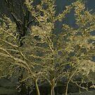 Feb. 19 2012 Snowstorm 41 by dge357