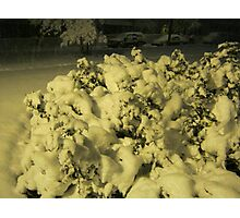 Feb. 19 2012 Snowstorm 42 Photographic Print