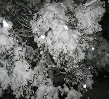 Feb. 19 2012 Snowstorm 47 by dge357
