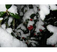 Feb. 19 2012 Snowstorm 48 Photographic Print