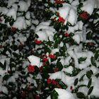 Feb. 19 2012 Snowstorm 49 by dge357