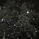 Feb. 19 2012 Snowstorm 50 by dge357