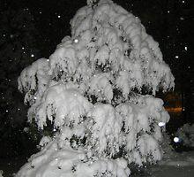 Feb. 19 2012 Snowstorm 52 by dge357
