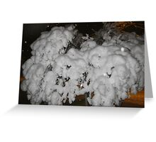 Feb. 19 2012 Snowstorm 66 Greeting Card