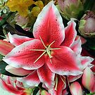 Hot Pink and White Lily and friends by Jane Neill-Hancock