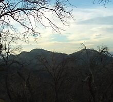 Barren Trees In The San Bernardino Mountains by Bearie23
