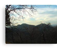 Barren Trees In The San Bernardino Mountains Canvas Print