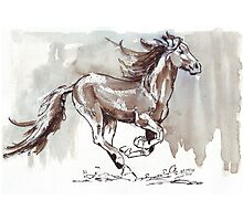 A handful of Southerly wind ... Wild horses in South Africa Photographic Print