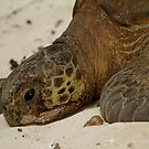 Green Turtle by DianaC