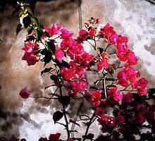 Flowers  by ZeeZeeshots
