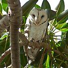 Barn Owl  by Rick Playle