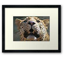 Leopard look! Framed Print