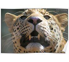 Leopard look! Poster