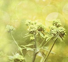 Simplicity Of Nature by Romanovna Fine Art Prints