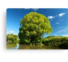 Flood Tree Canvas Print