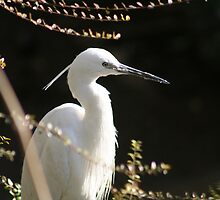 Egret by ellismorleyphto