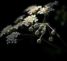 Spring through the shadows by larry flewers