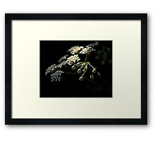 Spring through the shadows Framed Print